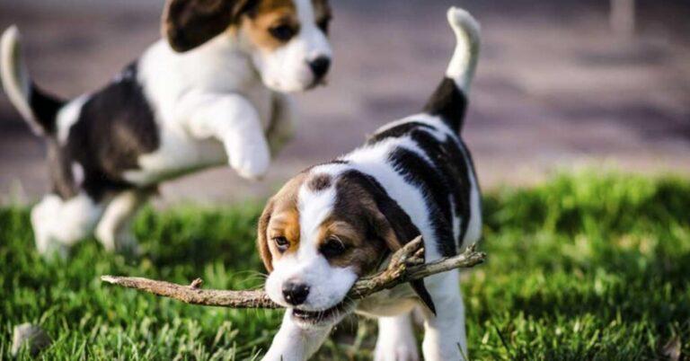 immagine cani