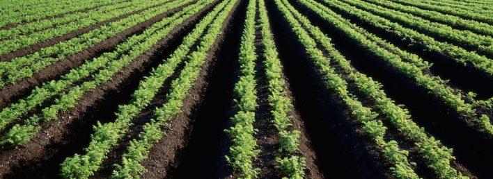 immagine agroindustriale